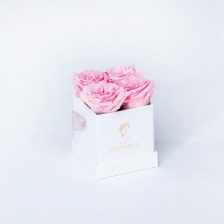 Tendresse Blanc roses poudrées